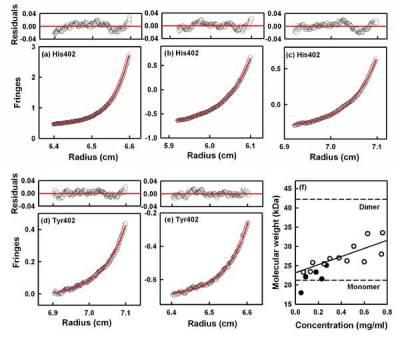 Factor H dimers by Sedimentation Equilibrium