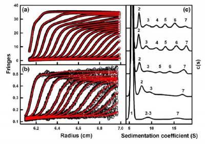 FH Oligomers by Sedimentation Velocity