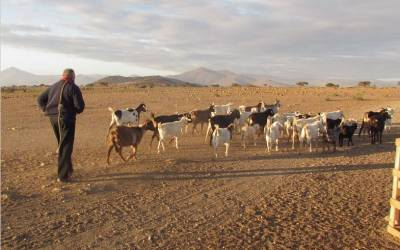 Adaptation to milking agropastoralism in Chilean goat herders and nutritional benefit of lactase persistence