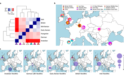 patterns-of-haplotype-sharing-across-high-coverage-adna-samples-a-hierarchical
