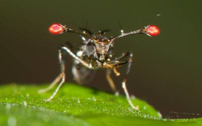 image of bug up close