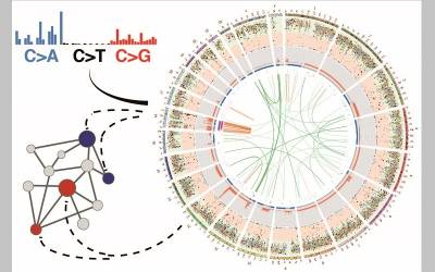 genetic events underlying cancer development