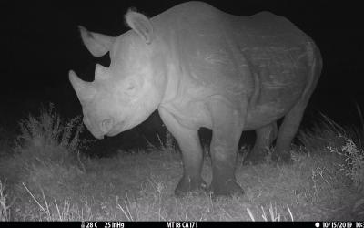 wwf_report_rhino_at_night