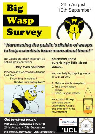 The Big Wasp Survey