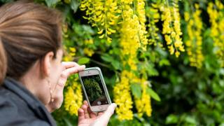citizen science at kew gardens