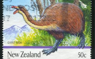 Giant Moa New Zealand