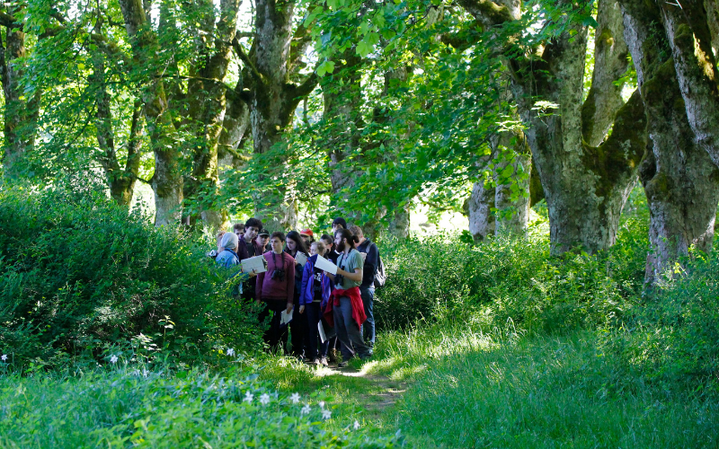 group of students in a green outside area