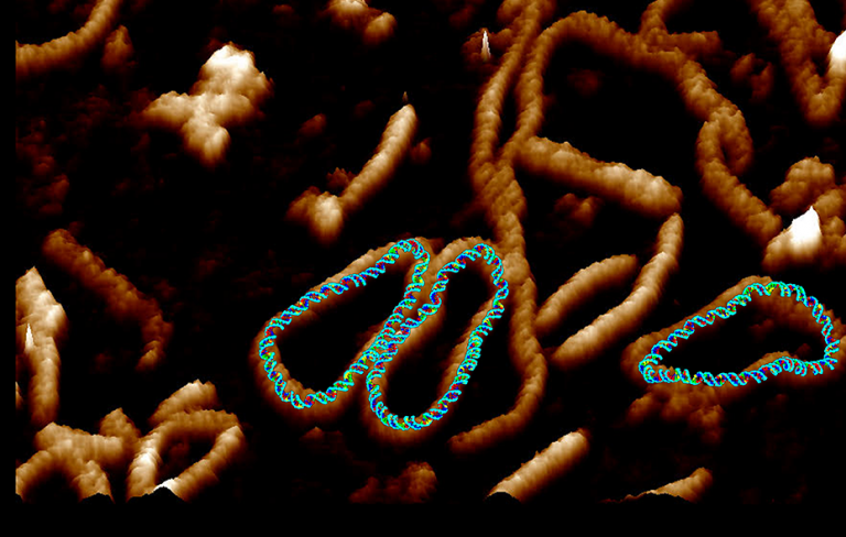 High resolution image of DNA by Dr Alice Pyne