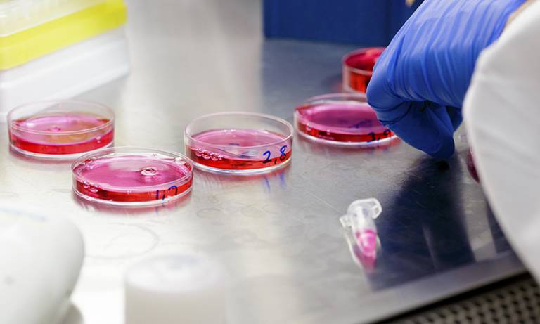 Laboratory cell cultures