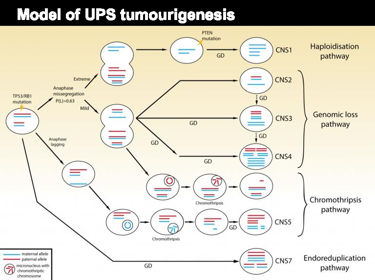Models of undifferentiated sarcoma tumourigenesis