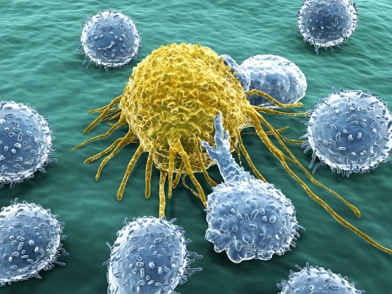 illustration of lymphocytes attacking cancer cell