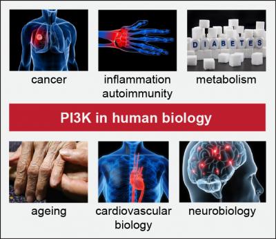 PI3K in disease…