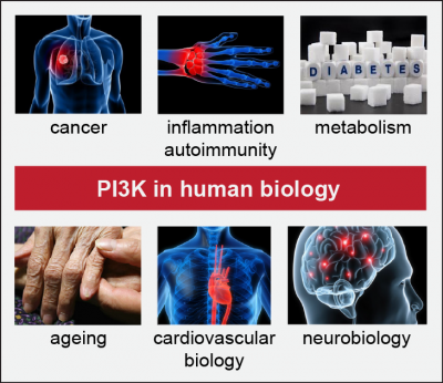 PI3K in disease…