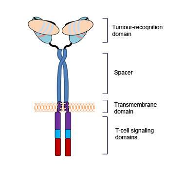 Chimeric Antigen Receptors