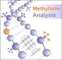 Methylome Analysis logo…