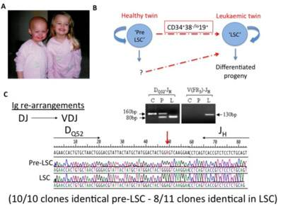Cell hierarchies and lineal relationships…