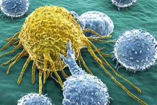 Cancer and immune cells…