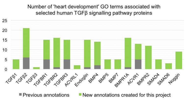 Heart Development Impact