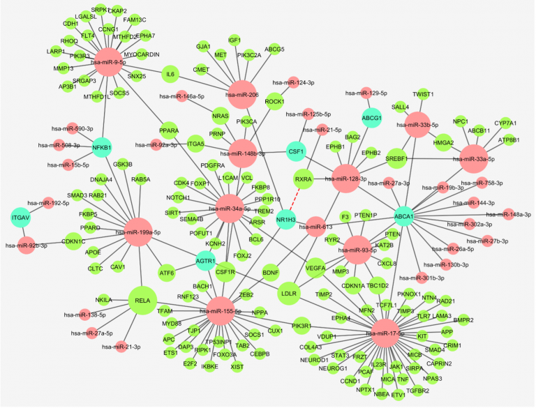 Molecular interaction network of microRNAs that may have a role in atherosclerosis