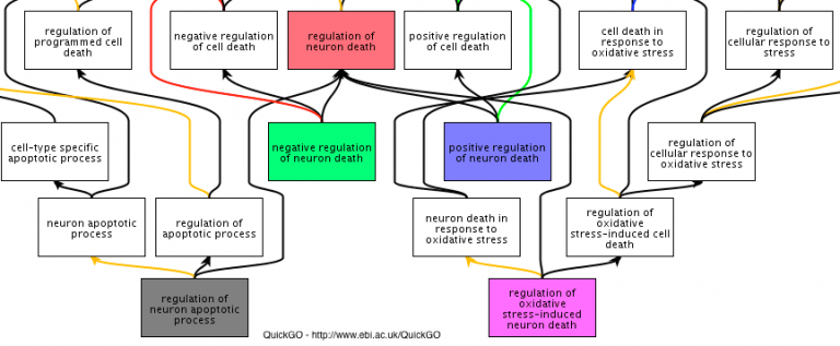 Selection of Gene Ontology terms relevant to neuron death