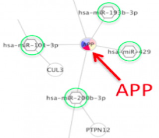 Figure 1. A fragment of a Cytoscape network showing APP gene products being targeted by four different regulatory microRNAs.