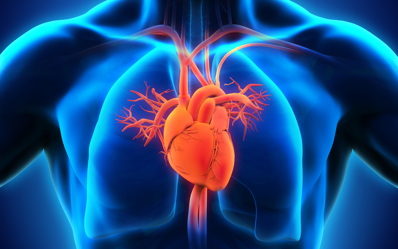 Cardiorespiratory Therapy MSc