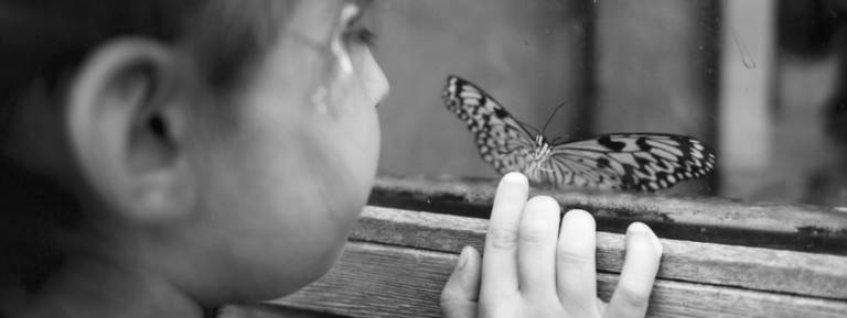 Child looking at butterfly