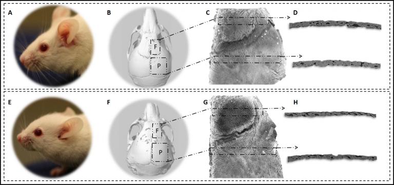 cranialbiomechanics picture f