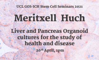 Meritzell Huch Stem Cell Seminar Poster