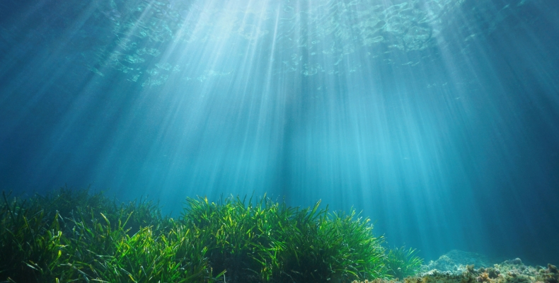 Generation One Campaign - underwater