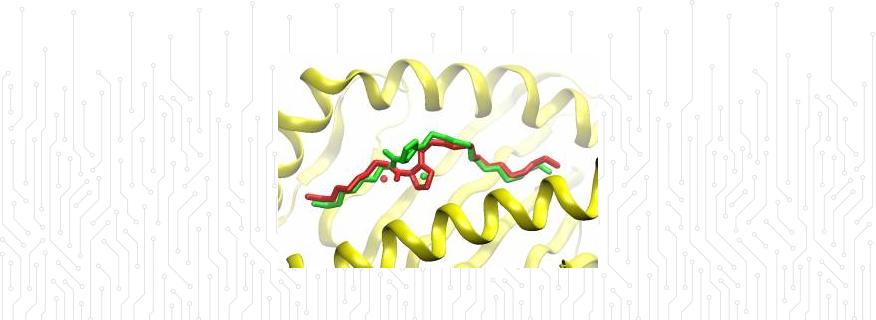 Major-Histocompatability Complex (MHC)