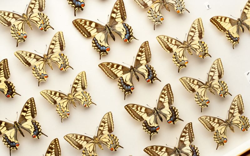 image of butterflies that leads to the neurodiversity support page