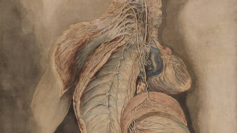 A painting by Charles Bell of a human heart