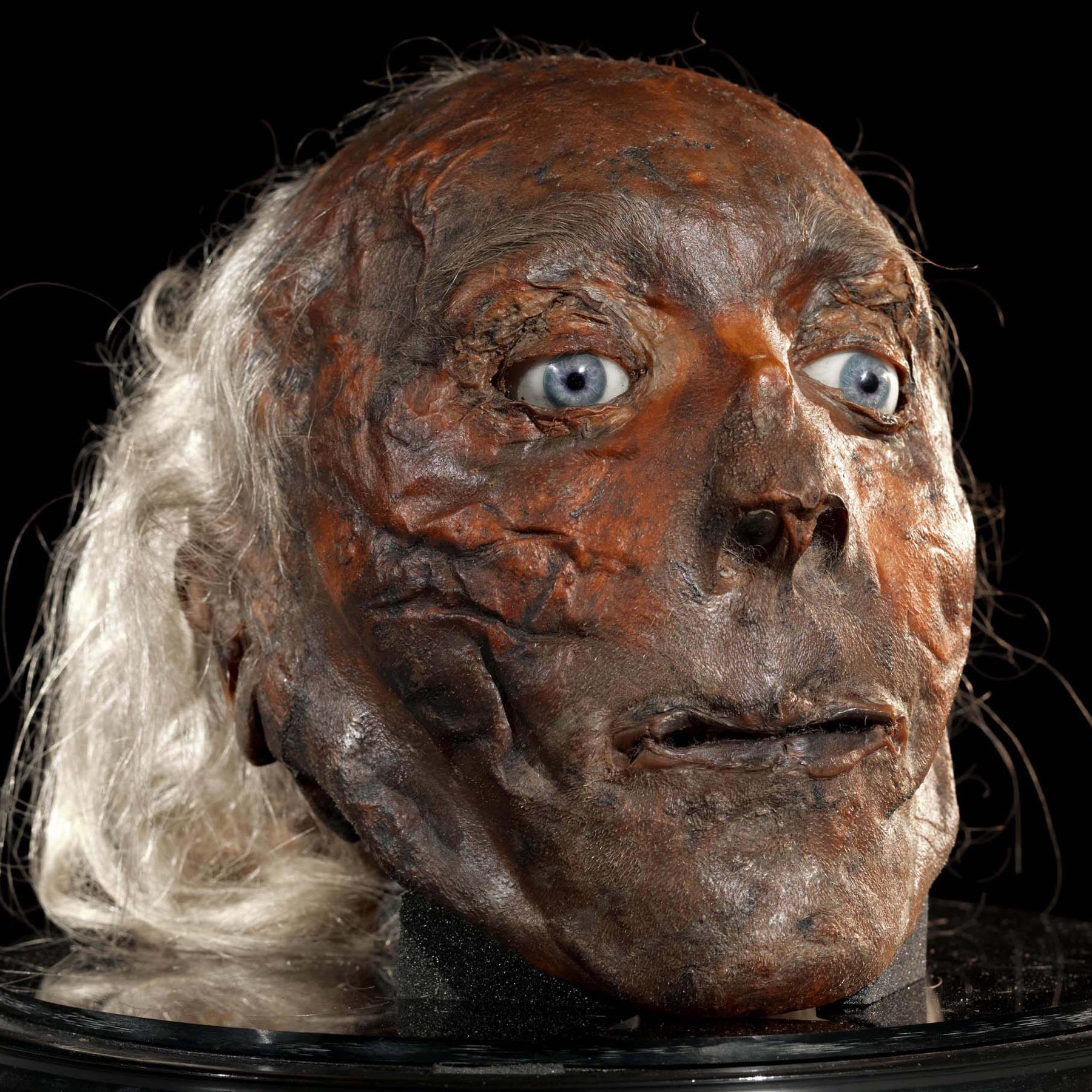 Colour photo of Jeremy Bentham's preserved head on a mount