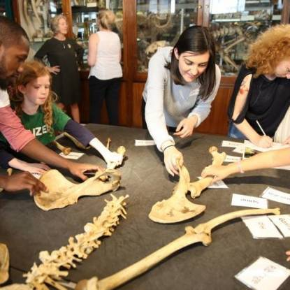 Explore Zoology at the Grant Museum