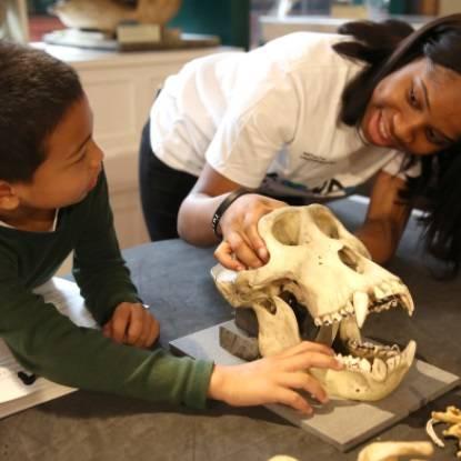 Student volunteer showing a child a gorilla skull