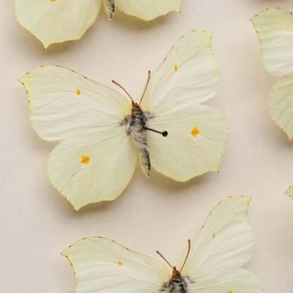 entomology collection