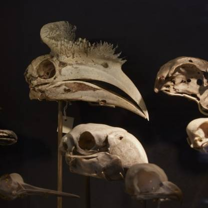 Colour photos of bird skulls in the dark
