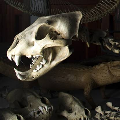 picture of a skull