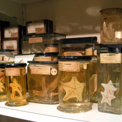 Starfish collection
