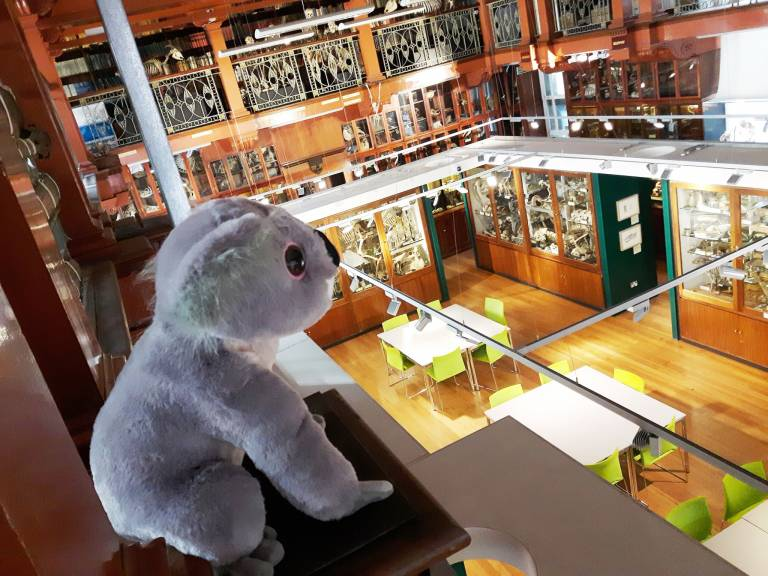 Stuffed toy in Grant Museum