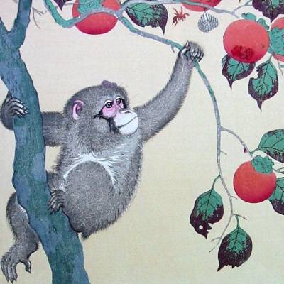 Monkey in a Persimmon Tree