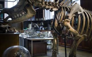 behind the scenes of the Grant Museum