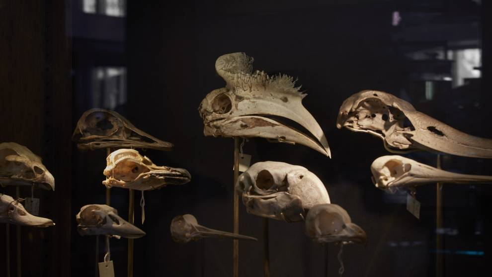 Colour photo of bird skulls in the dark