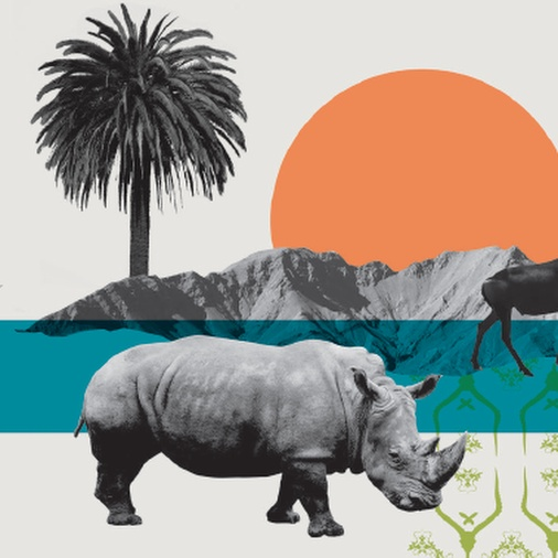 Colour illustration with orange and green shapes, plus black and white photos of a rhino, butterfly and a palm tree