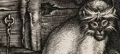 Picture of monkey by Durer, early modern academics