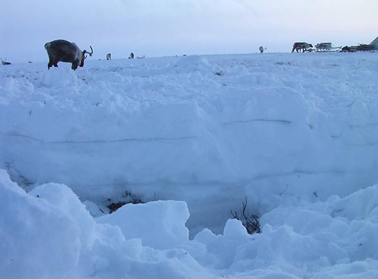 Advancing adaptive capacity of Arctic communities