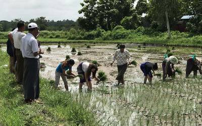 Farmers in Myanmar taking part in Rice Inc's pilot project
