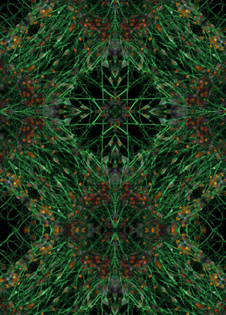 An intricate pattern featuring a number of mirror symmetries