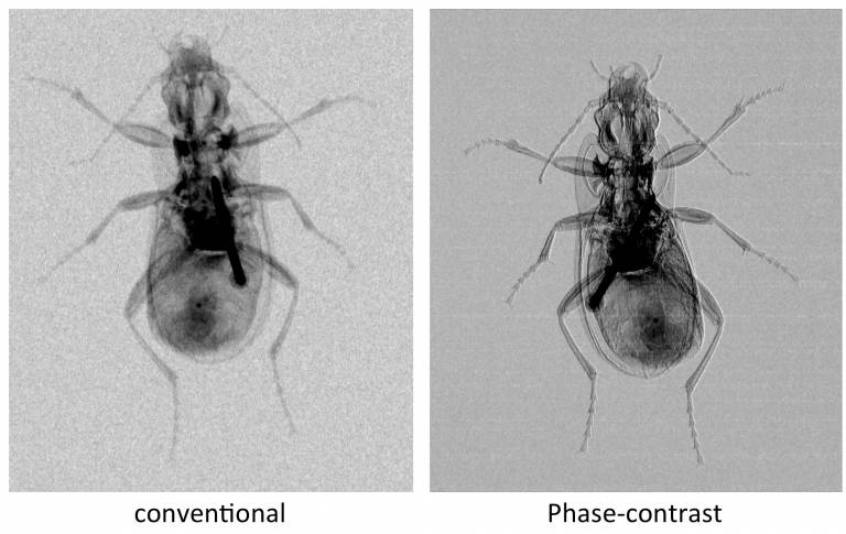 Conventional and phase-contrast x-ray of an insect